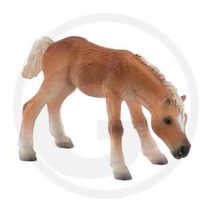 "BULLYLAND žaislinis arkliukas ""Haflinger Fohlen"""
